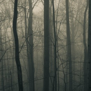 forest_through_the_trees